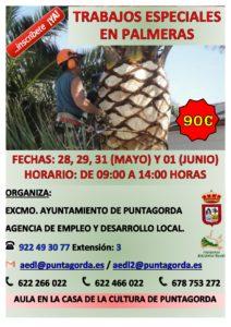 PALMERAS PUNTAGORDA 2018-001